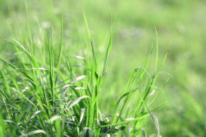 Das Gras wächst nicht schneller, wenn Du dran ziehst
