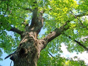 Stabil wie ein Baum – Die Baummeditation: Gut geerdet bist Du selbstbewusster